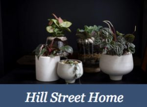 Greek Life available now at Hill Street Home, Hobart, Tasmania